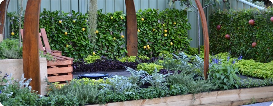 Espalier Fruit Trees (Lemons & Pomegranates